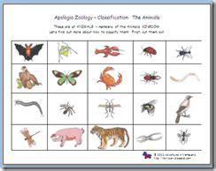 sorting classifying vertebrates invertebrates apologia