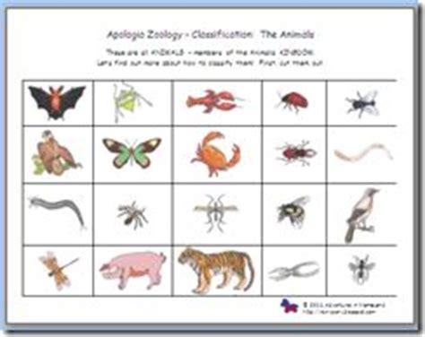 printable animal pictures for sorting sorting classifying vertebrates invertebrates apologia