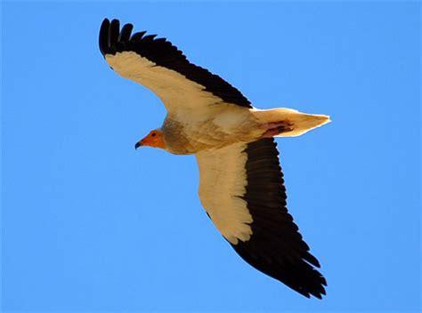 imagenes de jordan volando volando voy volando vengo galer 237 as fotonatura org