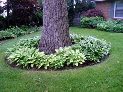 Trees For Backyard Landscaping by Best 25 Landscaping Around Trees Ideas On