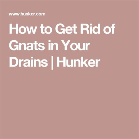 how to get rid of gnats in your house 19 best mail slot mail catchers images on pinterest