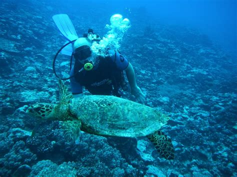 dive cook islands diving cook islands cook islands cook island divers ltd