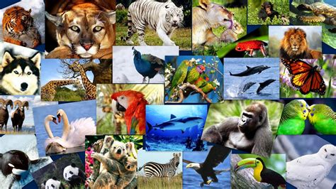 imagenes se animales fotos de grupos de animales imgenes auto design tech