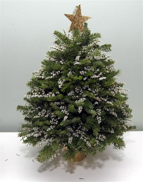 where to by articiful christmas trees staten island ny decorations as as your back yard silive