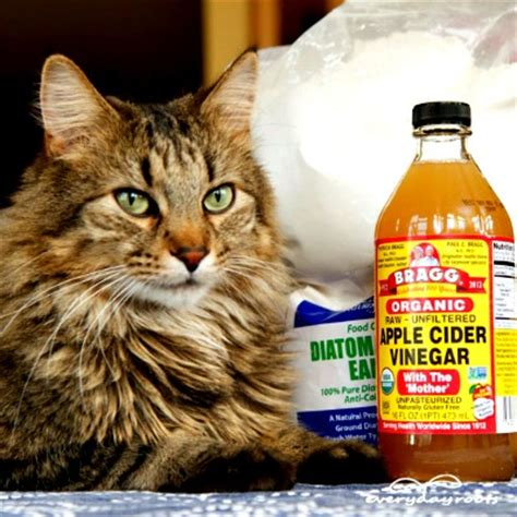 5 ways to prevent get rid of fleas on cats