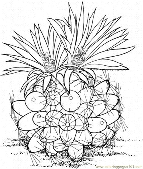 cactus flower coloring page cactus flower coloring pages