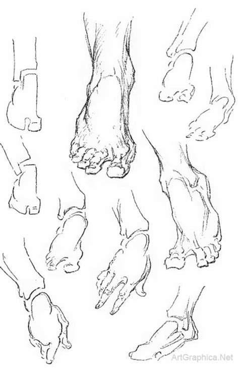 How To Draw Toes