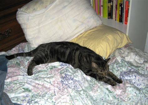 cat on bed humoroutcasts