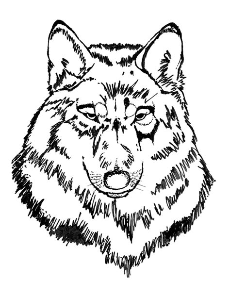 coloring book wolf free coloring pages of wolf