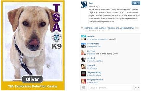 tsa puppies tsa great content in places thismoment content marketing