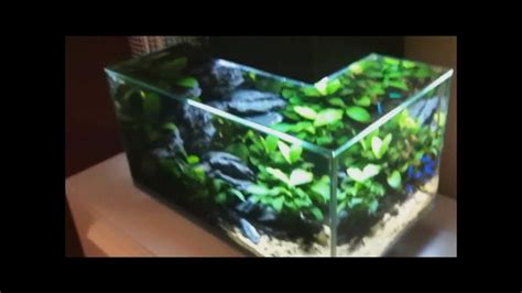 fluval aquascape the silent heaven fluval edge nano iwagumi aquascape youtube