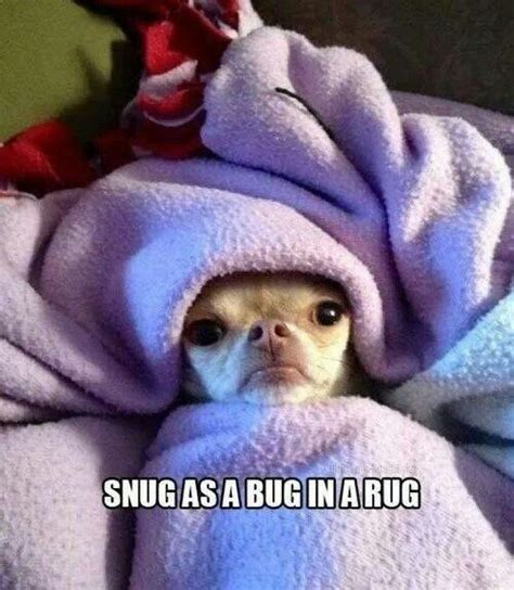 as snug as a bug in a rug snug as a bug in a rug dogs