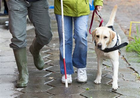 working with dogs the confusing world of service dogs mnn nature network