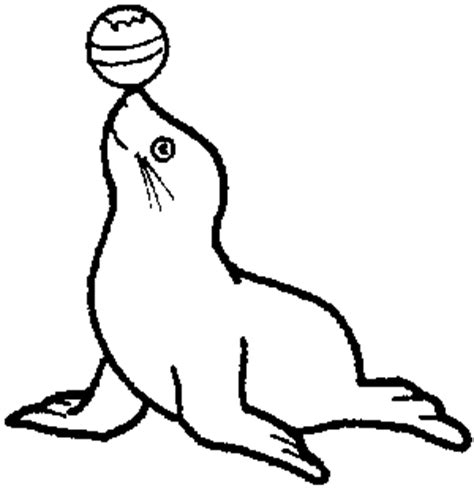 seal animal template