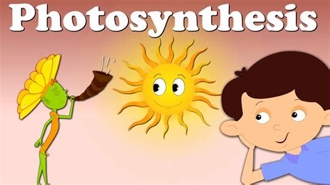 photosynthesis  food factories  action