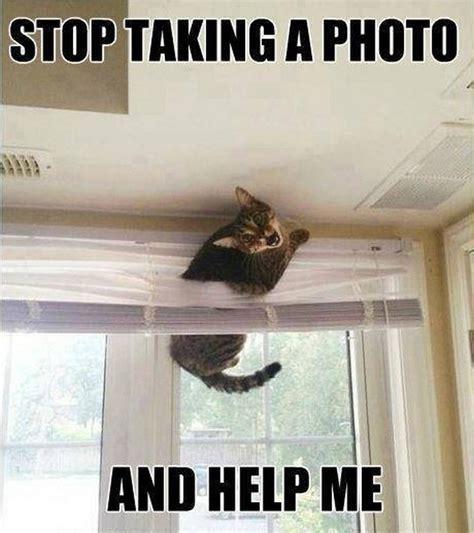 Help Meme - funny cats 16 pics