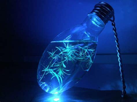 Light Bulb Aquarium Night Light Table Lamp ? iD Lights