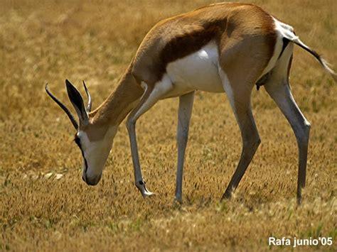 imagenes animales terrestres canalred gt fotografias de animales terrestres imagenes de