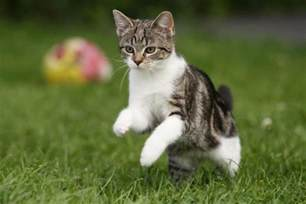 How To Stop A Cat From Jumping On Furniture by Cat Jumping In The Grass