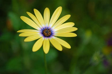 Simple Flower simple flower by englehardt