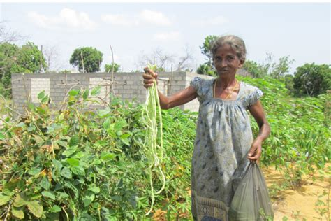 un habitat sri lanka introducing organic home gardening