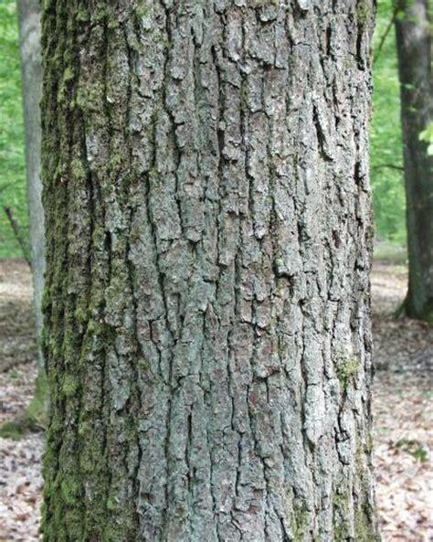 Rinde Der Eiche by Im Wald