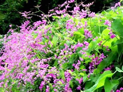 jenis tanaman hias  taman dinding vertikal beserta
