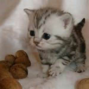 10 adorably tiny cats