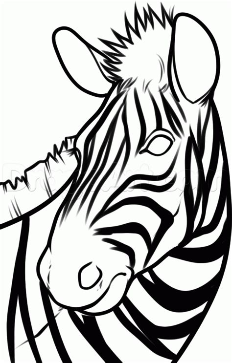 zebra head coloring page how to draw a zebra head step by step great plain