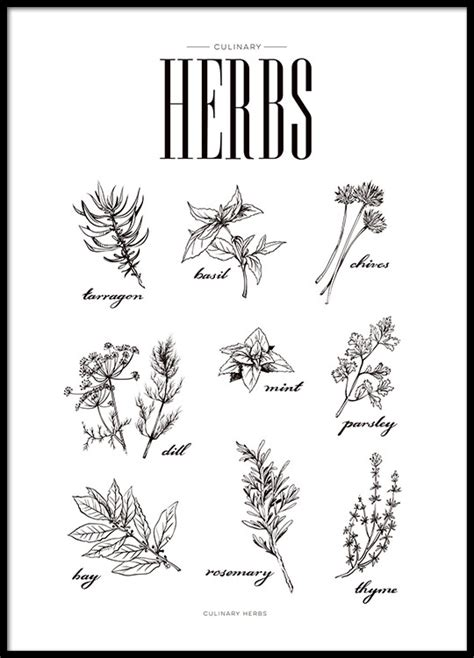 free printable herb poster stylish poster for kitchen kitchen art with herbs