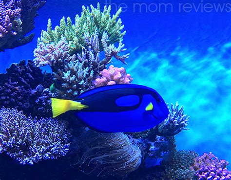 Cal State Monterey Bay Mba Reviews by 6 Reasons My Recent Monterey Bay Aquarium Visit Was