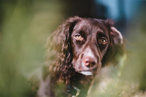 how to get rid of mites on dogs how to get rid of ear mites in dogs forever petpost petpost