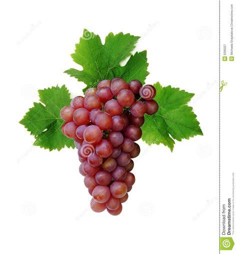 imagenes de uvas vector racimo rosado de la uva imagen de archivo imagen de