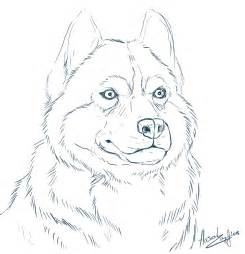 husky coloring pages alaskan husky coloring pages