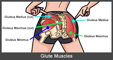 glute muscles diagram hip thrusts glute bridges how to do them 20 variations