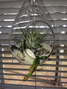 kitchen window terrarium 1000 images about terrariums miniature gardens on
