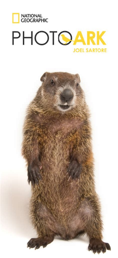 groundhog day how much time groundhog day 2017 celebrated with a portrait from the