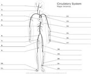 anatomy labeling worksheet anatomy and physiology labeling worksheets posted by janell at reflexology resources
