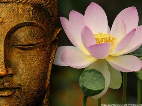 the lotus flower in buddhism image gallery lotus flower buddhism facts
