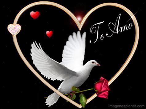 imagenes en movimiento nuevas paloma con rosa y coraz 243 n te amo s 243 lo imagenes de amor