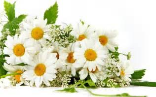 Christmas Flower Plant - daisy flower bokeh wallpaper 2560x1600 22785