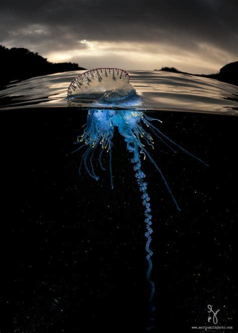 imagenes de la vida bajo el mar preciosas fotos que captan simultaneamente la vida sobre y