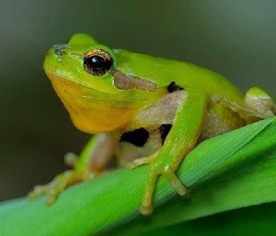 imagenes animales anfibios animales anfibios lista completa y sus caracter 237 sticas