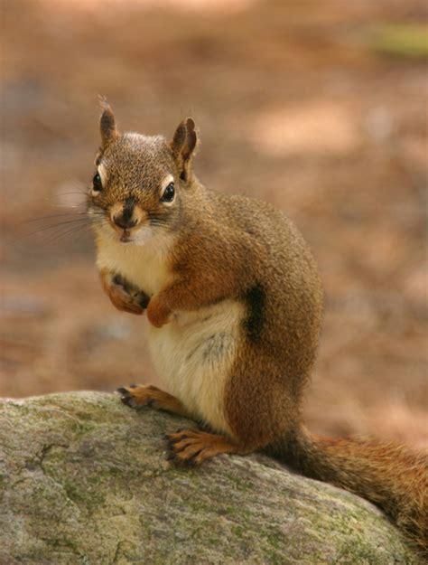 squirrel pest garden top 7 methods to keep squirrels garden