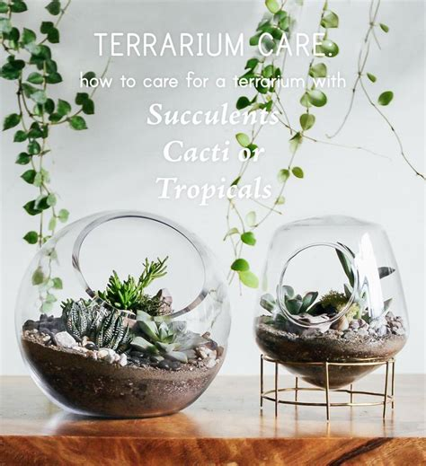 terrarium care   care  terrariums  succulents