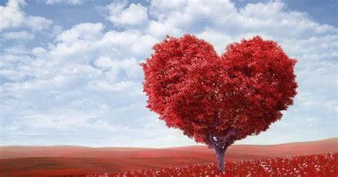 manfaat jagung bagi kesehatan bikin sehat jantung