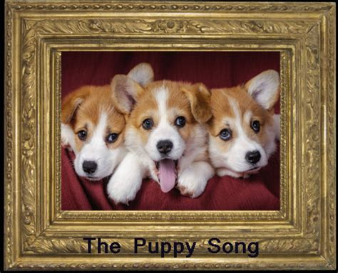 puppy song songs guitar chords and lyrics