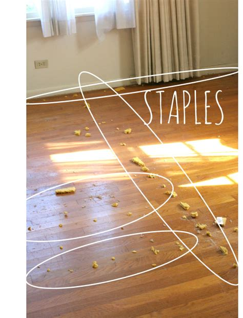 How To Remove Wood Flooring by How To Remove Carpet Staples From Wood Floors The Easy