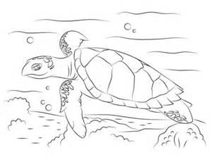 turtle eggs coloring page coloriage tortue imbriqu 233 e mignonne coloriages 224