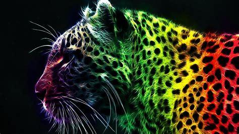colorful cat wallpaper colorato gatto hd sfondo del desktop widescreen l alta